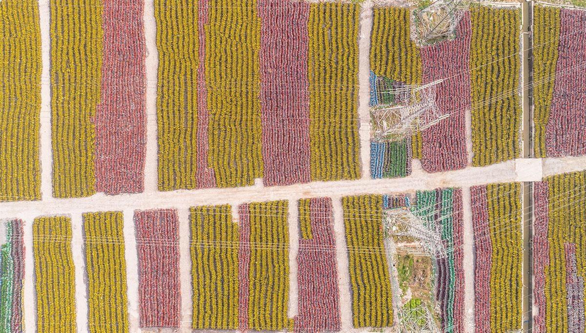 """Thậm chí nhiều người cho rằng những """"cánh đồng xe đạp"""" này nhìn chẳng khác gì những cánh đồng hoa. Trong ảnh là một bãi xe đạp tại thành phố Thượng Hải, nơi có khoảng 1,5 triệu xe bị bỏ lại. Ảnh: Shutterstock."""