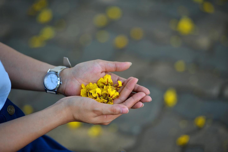 Ha Noi ruc ro trong nhung sac hoa mua he hinh anh 31