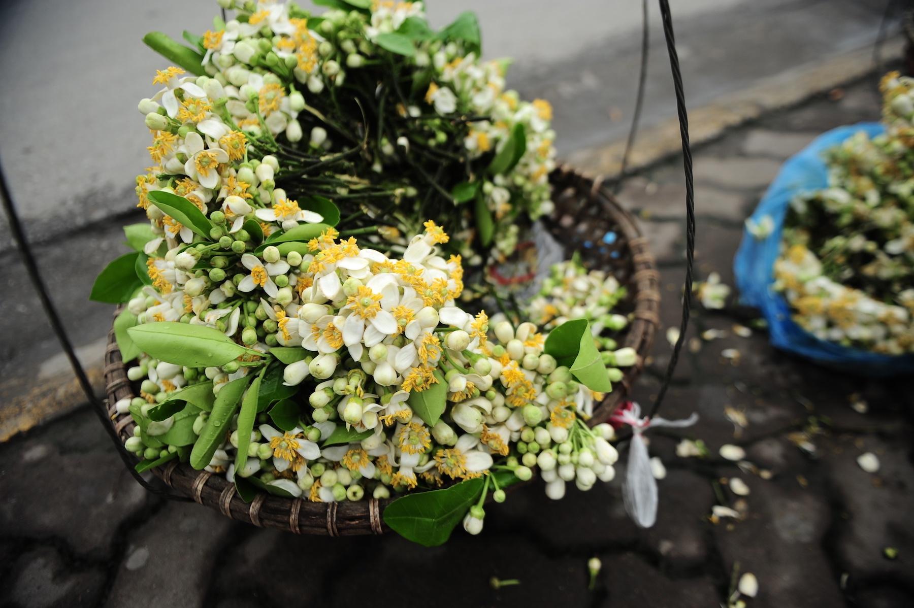nhung mua hoa o Ha Noi anh 39