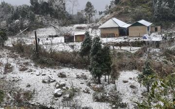 Tuyết phủ dày 20 cm, trâu bò chết cóng - Xã hội