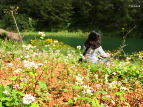 Kham pha nhung mua hoa co thang 12 o Da Lat hinh anh 13