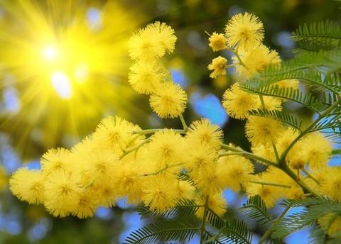Kham pha nhung mua hoa co thang 12 o Da Lat hinh anh 1