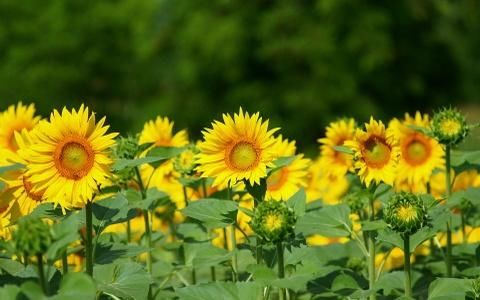 Kham pha nhung mua hoa co thang 12 o Da Lat hinh anh 6