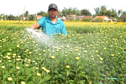 Thuong lai do ve lang hoa cuc lon nhat mien Trung hinh anh