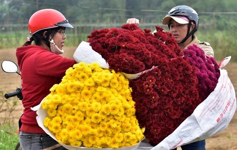 Do xo ve lang hoa mua cuc dong tien dip Tet Mau Tuat hinh anh