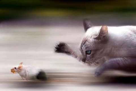Bai toan hai nao: Meo hay chuot chay nhanh hinh anh
