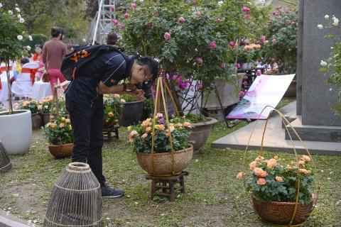 Le hoi hoa hong Bulgaria e khach, ve cho den giam gia hinh anh 10
