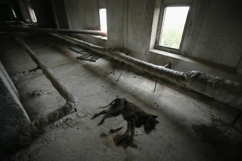 Thanh pho hoang tan 3 thap ky sau tham hoa Chernobyl hinh anh 9