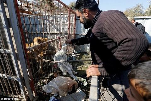 Cap doi gau va su tu 'cho vo' trong chien tranh Syria hinh anh 5