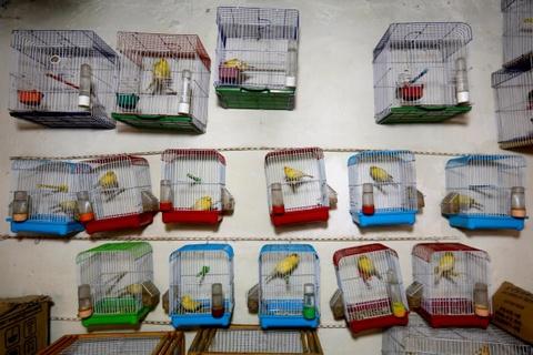 Cho chim o Kabul: Noi noi buon chien tranh lui lai hinh anh 6