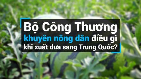 Trung Quoc 'boi thuc' dua hau, dan chuong qua nho 3-4 kg hinh anh