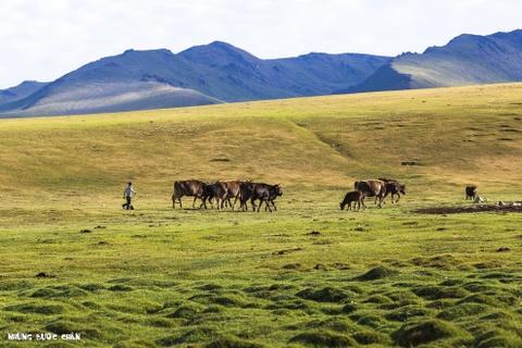 Cuoc song tren thao nguyen Tay A qua ong kinh phuot thu Viet hinh anh 8 Người Kyrgyz không nghèo, mặc dù họ không trữ nhiều hoặc tiêu dùng tiền giấy trong cuộc sống hằng ngày. Đàn gia súc của họ có thể lên đến hàng trăm con có giá trị kinh tế cao và họ thường lấy cừu làm đơn vị tiền tệ trung gian trong trao đổi, mua bán. Một chiếc điện thoại di động bình thường sẽ có chi phí là 1 con cừu. Một con bò lông dài đáng giá 10 con cừu, trong khi một con ngựa tốt đáng giá tới 50 con cừu. Chi phí cho một cô dâu vào khoảng 100 con cừu. Những gia đình giàu có thường sở hữu thêm những con vật mang tính biểu tượng của người Kyrgyz như gà lôi, chim công, lạc đà, … Những con lạc đà của họ thuộc loài lạc đà hai bướu, được gọi là Bactrian, có thể chịu được những nơi có thời tiết khắc nghiệt như những vùng núi cao hẻo lánh ở Kyrgyzstan.