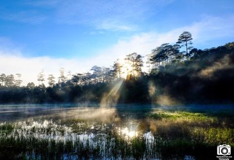 Ve me hoac cua ho Tuyen Lam sang som mua dong hinh anh 7 Rừng thông trong sương sớm.