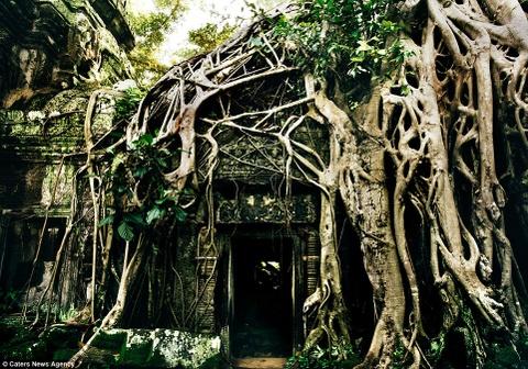 Ve dep ky ao cua khu den phai den mot lan trong doi hinh anh 12 Các cây cổ thụ trùm rễ lên đền Ta Prohm.