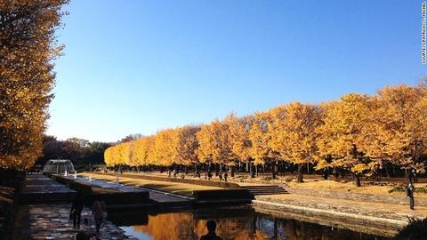 Nhung diem ngam canh mua thu dep nhat Tokyo hinh anh 1 Công viên Showa Kinen: Nằm ở Tachikawa, cách trung tâm Tokyo 30 phút đi tàu, công viên Showa Kinen có những hồ nước xinh xắn, sân chơi và cảnh quan tuyệt đẹp. Du khách có thể dành cả ngày mới khám phá hết công viên.