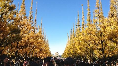 Nhung diem ngam canh mua thu dep nhat Tokyo hinh anh 3 Đại lộ Icho Namiki: Đại lộ nằm bên trong công viên Meiji Jingu Gaien, trung tâm Tokyo. Nơi đây có những hàng cây lá quạt chuyển màu vàng rực rỡ mỗi độ thu về.