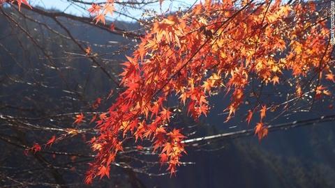 Nhung diem ngam canh mua thu dep nhat Tokyo hinh anh 5 Mount Mitake: Nằm trong công viên quốc gia Chichibu-Tama-Kai, Mount Mitake mất 75 phút đi tàu từ trung tâm thành phố, nhưng vẻ đẹp của cây cối mùa thu ở đây vô cùng xứng đáng cho hành trình này.