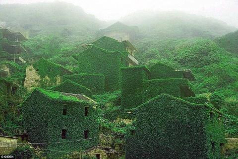Canh dep than tien cua Trung Quoc tren bao Anh hinh anh 6 Cây dại phủ kín trên những bức tường đá cũ, cửa sổ, cửa ra vào và cả trên những lối đi tại một ngôi làng chài bỏ hoang ở đảo Shengshan, Chiết Giang, Trung Quốc.