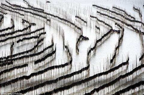 Canh dep than tien cua Trung Quoc tren bao Anh hinh anh 8 Một trang trại ngập nước ở tỉnh Phúc Kiến, Trung Quốc.