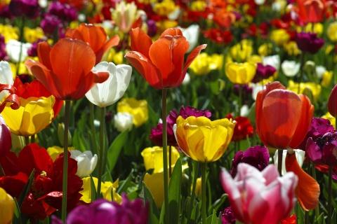 Nhung chon ngam hoa xuan tuyet dep o chau A hinh anh 7