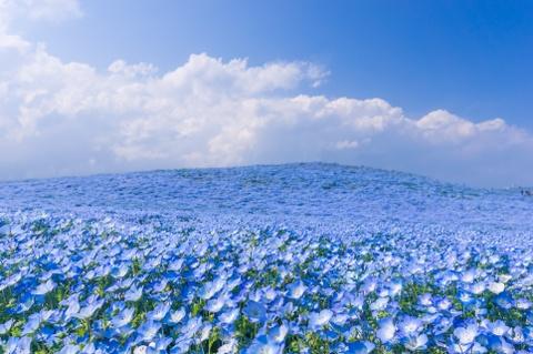 Nhung chon ngam hoa xuan tuyet dep o chau A hinh anh 2