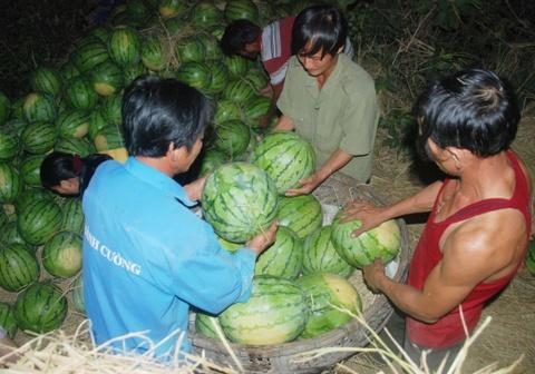 Trang dem giai cuu dua hau Quang Ngai hinh anh