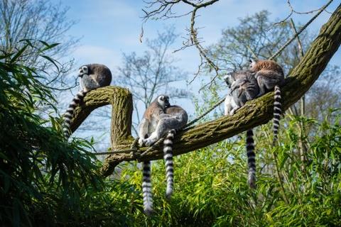 Mot Madagascar hoang da, khac nghiet chang giong phim hoat hinh hinh anh