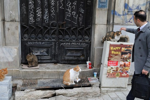 Istanbul - thu do cua loai meo hoang hinh anh 2