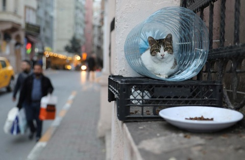 Istanbul - thu do cua loai meo hoang hinh anh 1