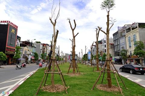 Chủ tịch Hà Nội mong muốn đường phố bốn mùa có hoa nở