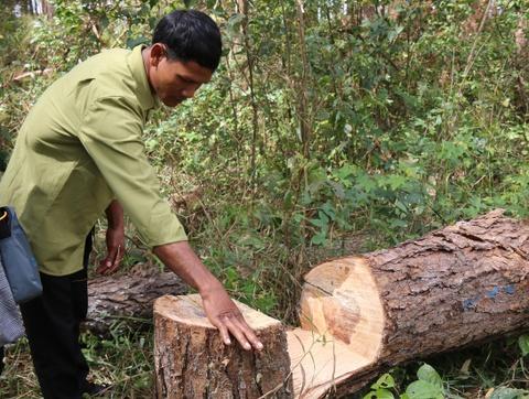 Dân chặt cây, lấn chiếm đất rừng dựng nhà trái phép sát UBND xã