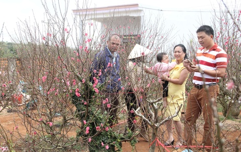 Nguoi dan o Tay Nguyen ghep thanh cong hoa dao co 3 mau hinh anh 8