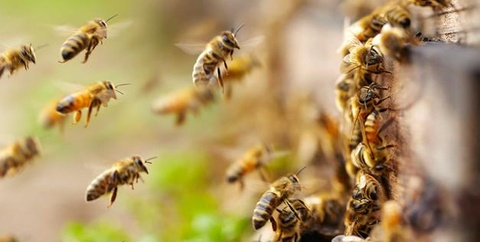 Ong vo to tan cong, 3 tre phai cap cuu trong tinh trang nguy kich hinh anh