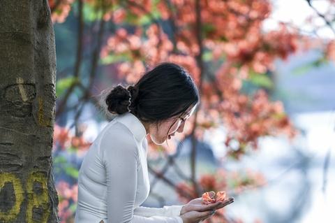 Hoa phuong do ruc ro khap Ha Noi hinh anh 7