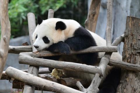 #Justgo: Cong vien gau truc noi tieng o Tu Xuyen hinh anh