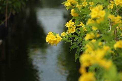 'Vuong quoc hoa' mien Tay nhung ngay giap Tet hinh anh 4