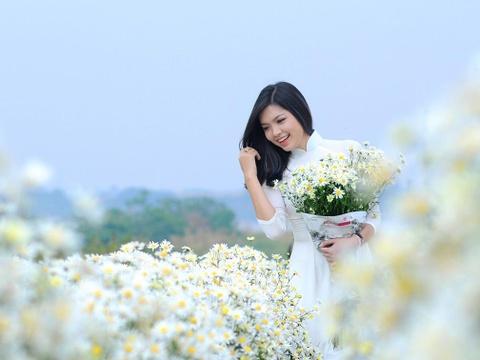Xuyen xao mua cuc hoa mi don dong ve giua long Ha Noi hinh anh