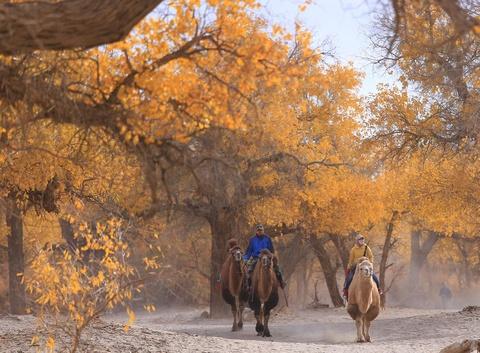 Sắc thu vàng quyến rũ ở vùng biên giới Nội Mông