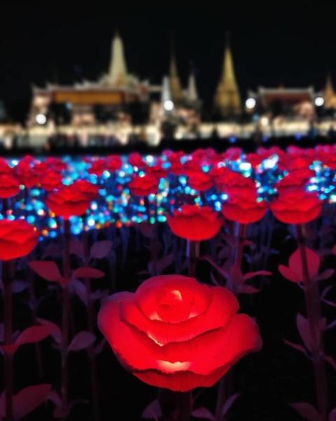 'Canh dong Hoang gia' Thai Lan ruc sang, chao mung nha vua dang quang hinh anh 4