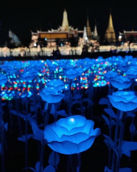 'Canh dong Hoang gia' Thai Lan ruc sang, chao mung nha vua dang quang hinh anh 5