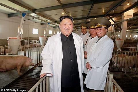 Kim Jong Un tuoi cuoi tham trang trai nuoi lon cua khong quan hinh anh 4