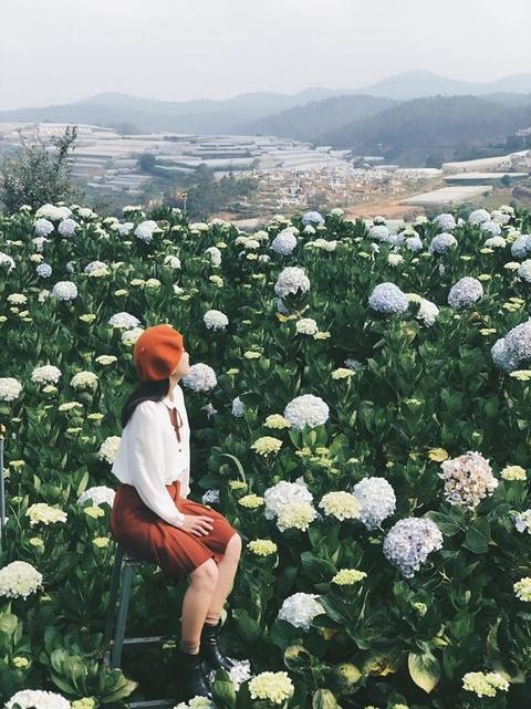 Cam tu cau, lavender va 5 mua hoa no dep nhat Da Lat hinh anh 6