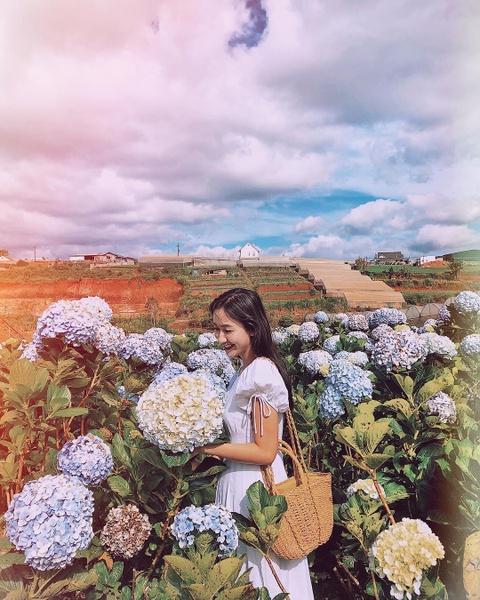 Cam tu cau, lavender va 5 mua hoa no dep nhat Da Lat hinh anh 5