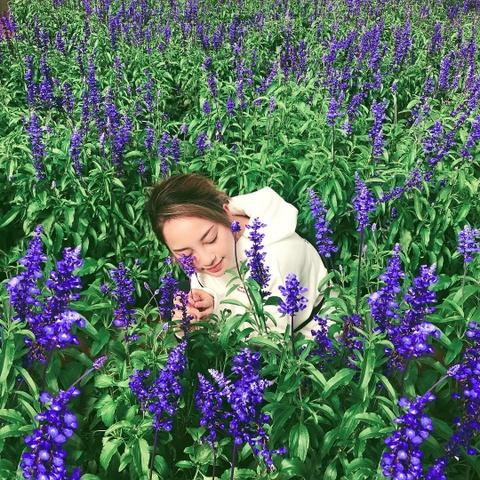 Cam tu cau, lavender va 5 mua hoa no dep nhat Da Lat hinh anh 14