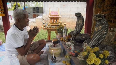 Ran ho mang Thai Lan: Vua duoc ton tho, vua la dac san hinh anh 2