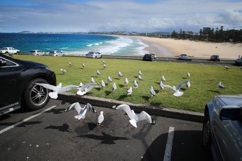 Australia va ky niem ve nhung khung troi mong mo hinh anh 58