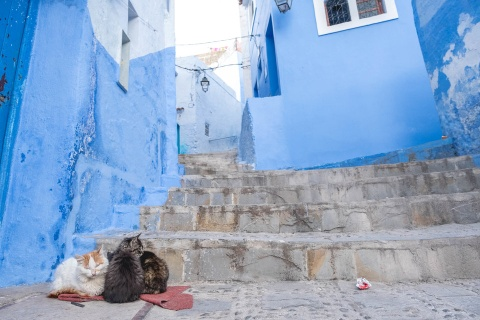 Thanh pho xanh o Morocco noi nhu con nho Instagram hinh anh 13