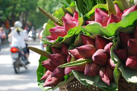 Ha Noi ruc ro trong nhung sac hoa mua he hinh anh 39