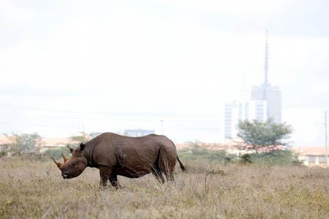 Nairobi - thu do duy nhat the gioi dong vat hoang da tu do di lai hinh anh 11