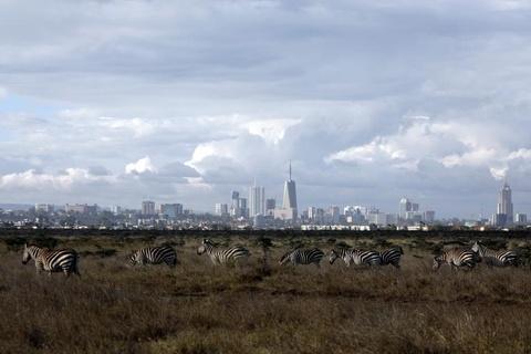 Nairobi - thu do duy nhat the gioi dong vat hoang da tu do di lai hinh anh 8